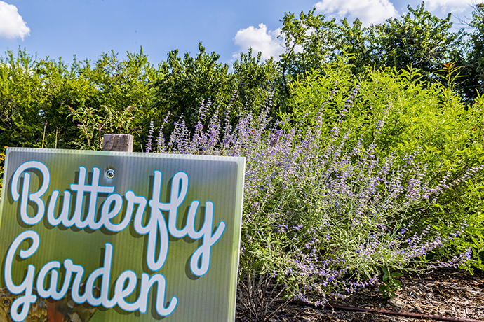 Butterfly Garden on Northaven Trail (Photo by Danny Fulgencio)