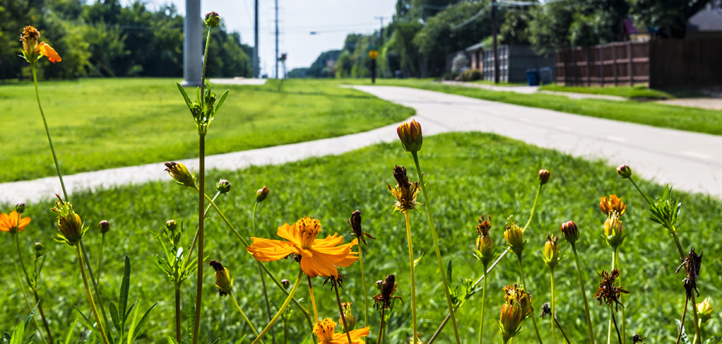 Wildflowers on Northaven Trail (Photo by Danny Fulgencio)