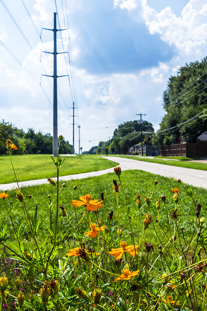 Wild flowers on Northaven Trail (Photo by Danny Fulgencio)