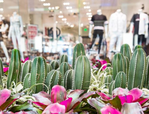 NorthPark's plant prodigy travels the world creating landscapes to die for