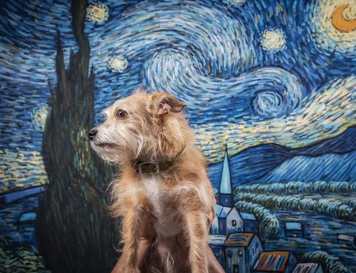 The Pets Next Door: Van Gogh is all about the ears